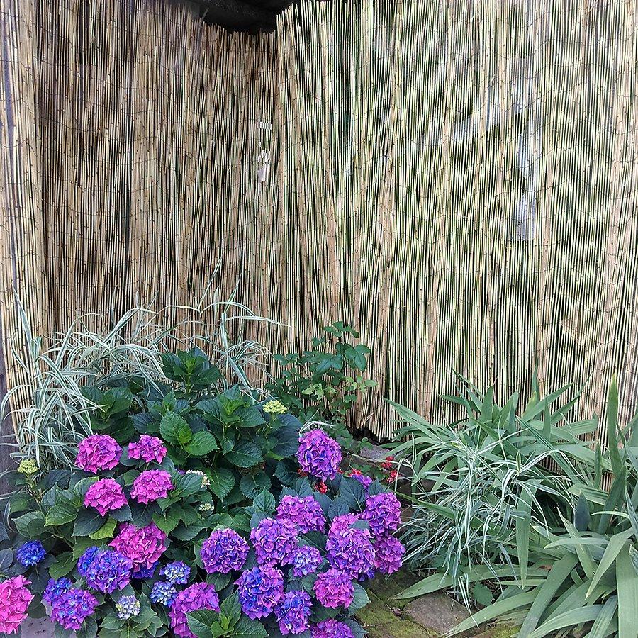 """Rákosová stínící rohož """"úzký rákos"""" - délka 500 cm a výška 180 cm"""
